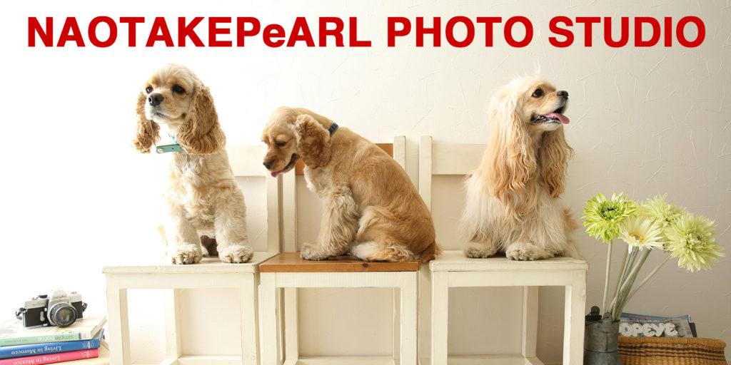 画像に alt 属性が指定されていません。ファイル名: 0S3A8476-1024x512.jpg